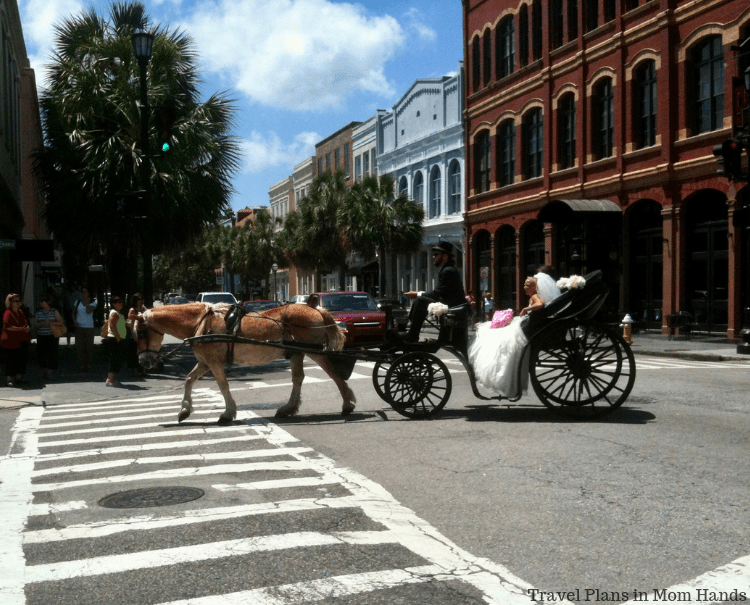 Carriage rides make for great history lesson in Charleston, SC-unless you are a bride and groom wanting to use it for other reasons.