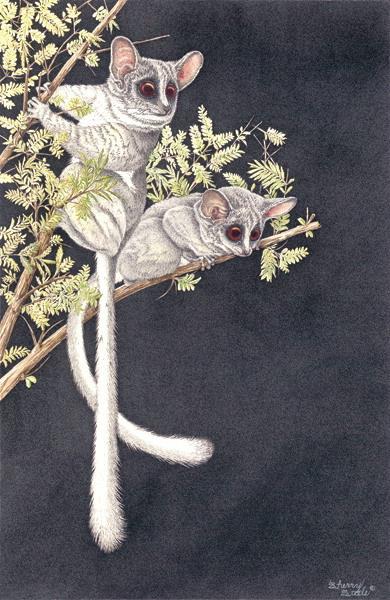 Sherry Steele Artwork - Pixies of the Night | Primates
