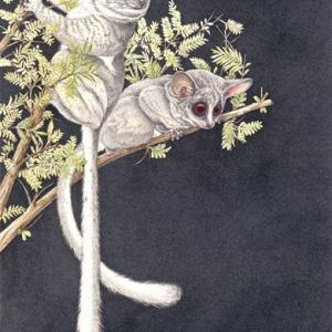 Sherry Steele Artwork - Pixies of the Night | Primates