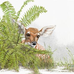Sherry Steele Artwork - A Peek at Innocence | Fawn Deer