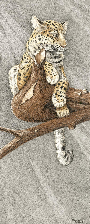Sherry Steele Artwork - Before Night Falls | Leopard