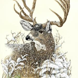 Sherry Steele Artwork - High Desert Dandy | Deer