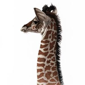 Sherry Steele Artwork - It's Hard to be Humble   Giraffe