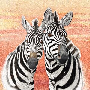 Sherry Steele Artwork - Just Me and My Gal | Zebras