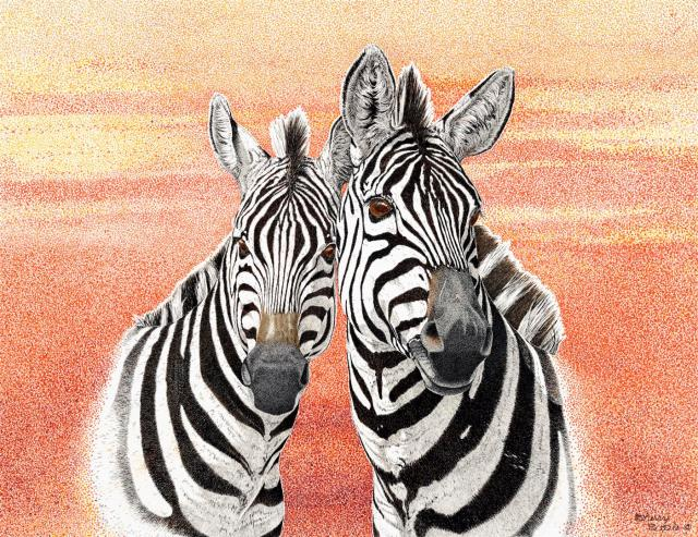 Just Me and My Gal | Zebras