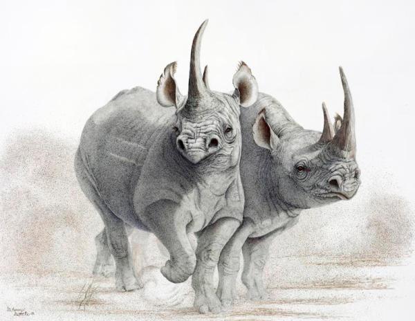 Sherry Steele Artwork - Ready to Rumble | Rhinos