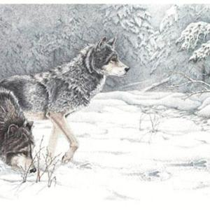 Sherry Steele Artwork - Scent of the Hunt | Wolves