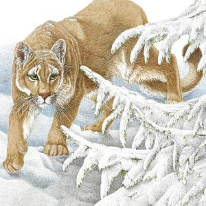 Sherry Steele Artwork - Suspicion | Mountain Lion