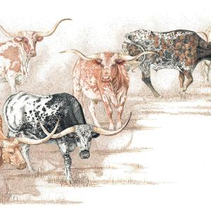 Sherry Steele Artwork - The Look of Legends | Longhorns