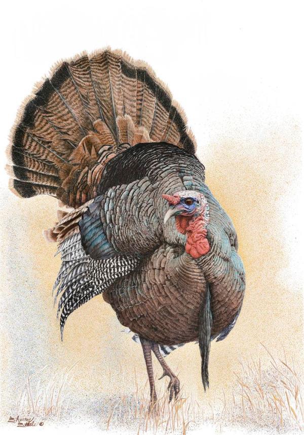Sherry Steele Artwork - Something To Strut About | Turkey