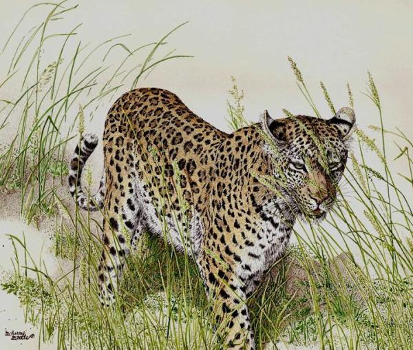 Sherry Steele Artwork - Whispers In The Grass | Leopard