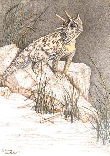 Sherry Steele Artwork - Heart of a Giant | Horned Toad