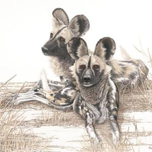 Sherry Steele Artwork - The Painted Phantoms of Africa | Wild Dogs