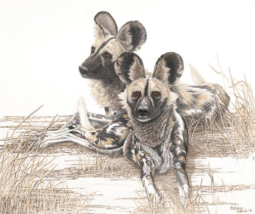 The Painted Phantoms of Africa | Wild Dogs