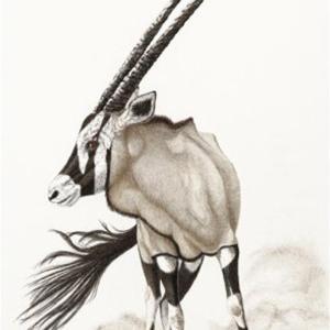 Sherry Steele Artwork - Pivot Point   Gemsbok