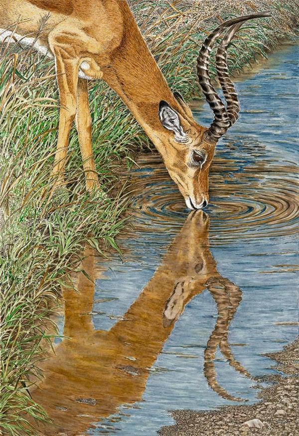 Sherry Steele Artwork Impala Beside Still Water