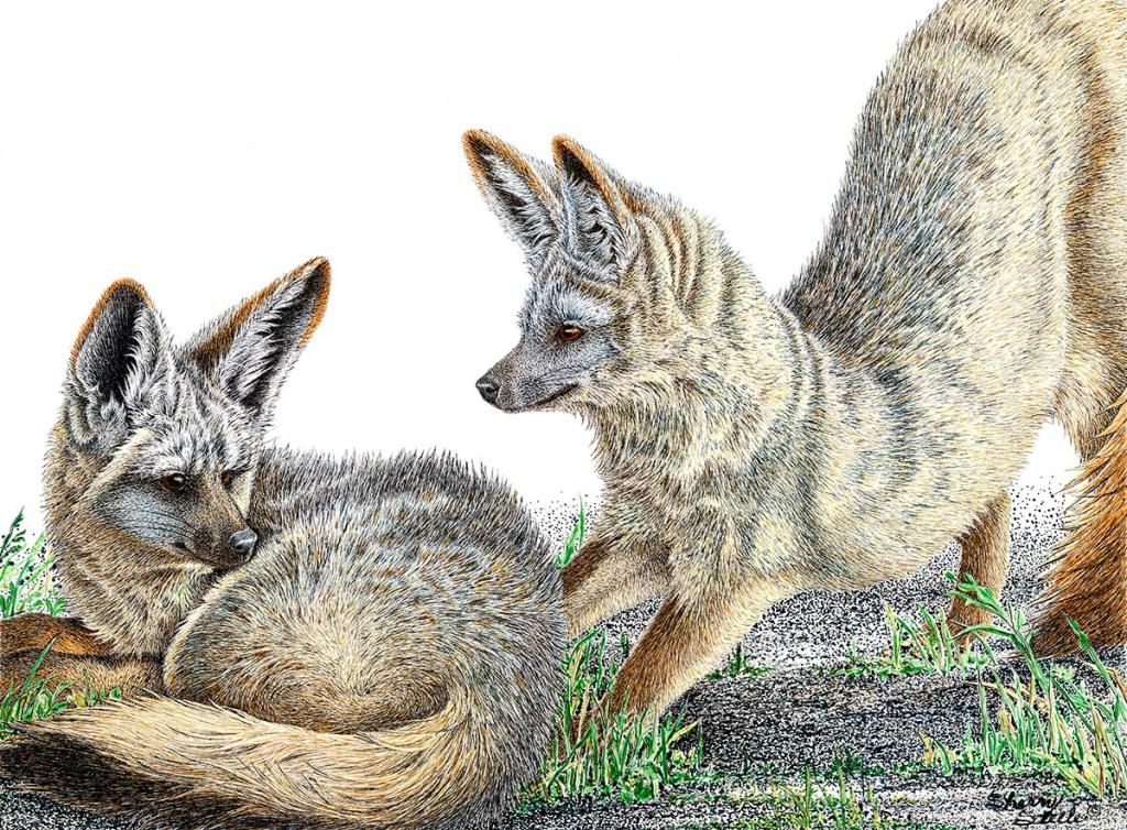Bat Eared Foxes_Artwork by Sherry Steele