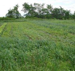 harvestbigfield