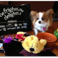 PetSmart Happy HOWL-O-ween Pet Costumes Review