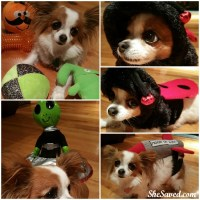 Pets love Halloween too! Check out these fun Halloween costumes from PetSmart!