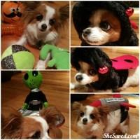 PetSmart Happy HOWL-O-ween Pet Costumes Review