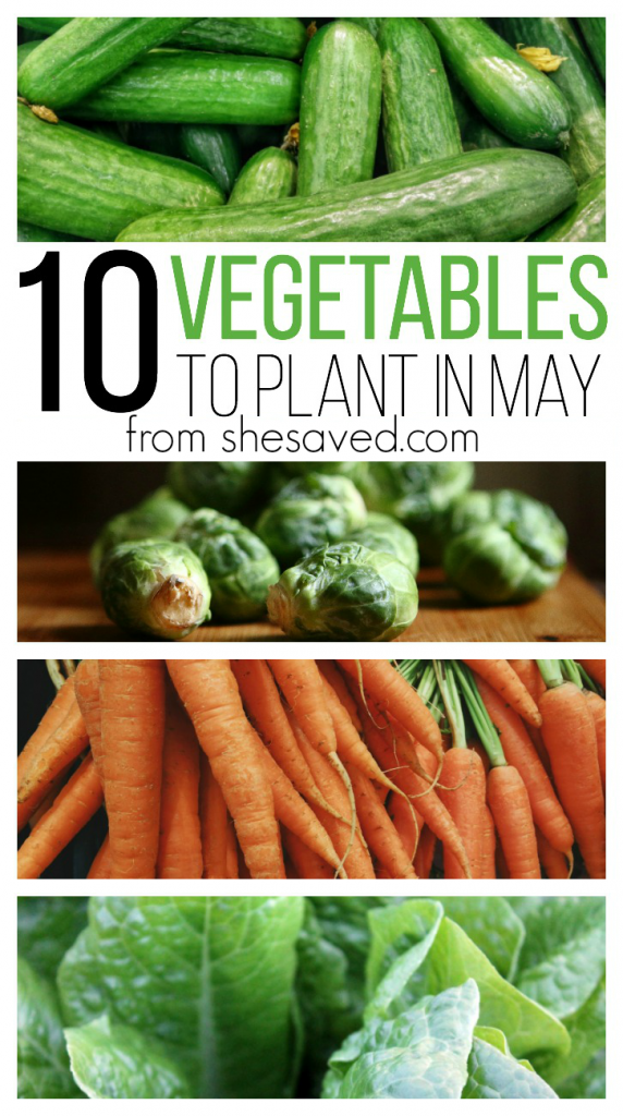 Getting ready to start your garden? Here aer 10 Vegetables to Plant in May that will get your growing off to a great start! Happy harvesting!