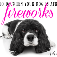 Helpful Tips for a Dog Afraid of Fireworks