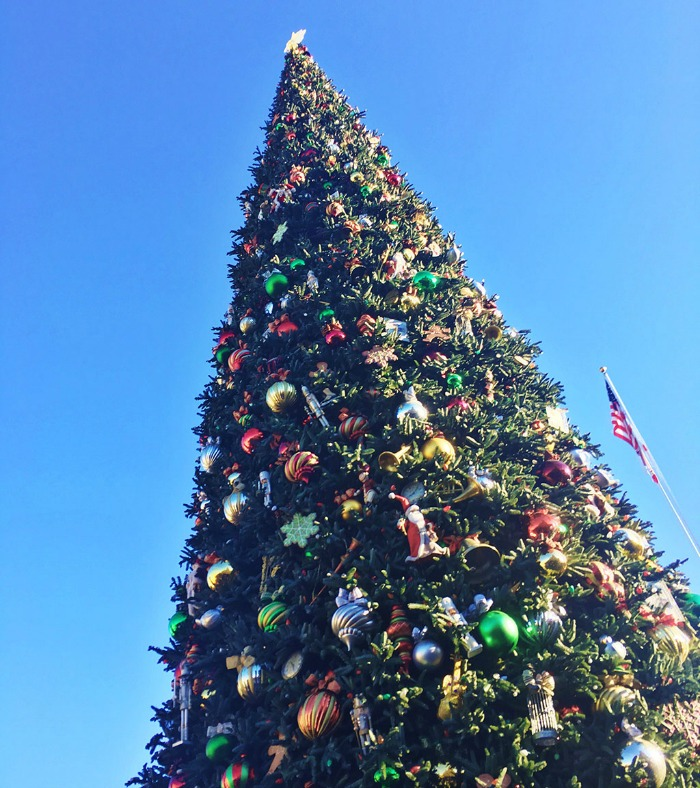 Disneyland Tree