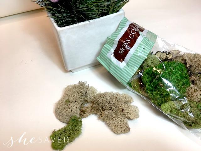 Moss for holiday arrangement