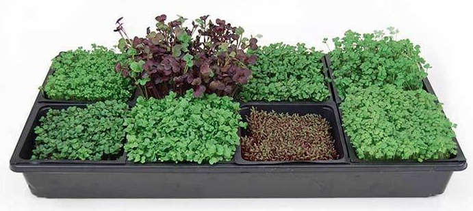 Hydroponic Microgreens Starter Kit