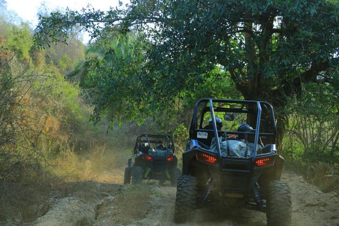razr in the jungle