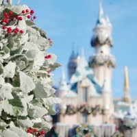 SAVE on Disneyland Packages with these (early!)  Black Friday Deals!