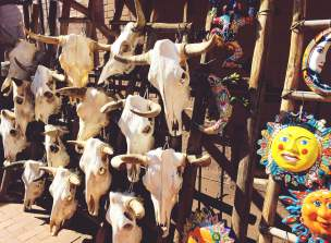 Cow skulls in Santa Fe, New Mexico