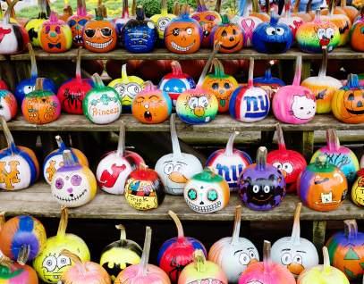 pumpkins_galore