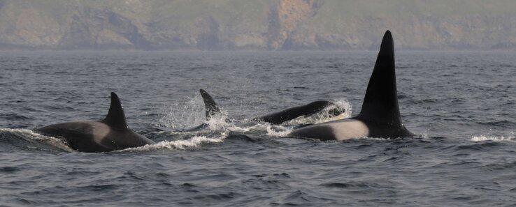 orcas big-K2000