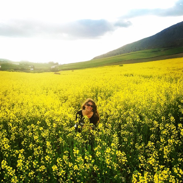 < Field of yellow flowers >