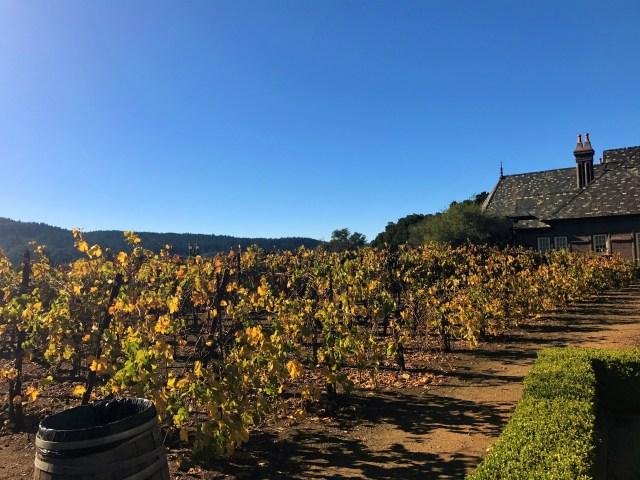 < Fall in the vineyards >