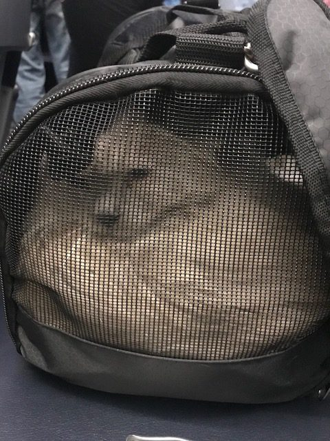 Carrying a pet on board a plane
