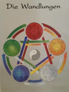 Shiatsu Wien - Darstellung der 5 Elemente - Wandlungsphase Holz