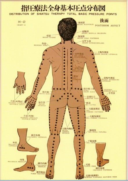 The Namikoshi Shiatsu Points on the back of the body