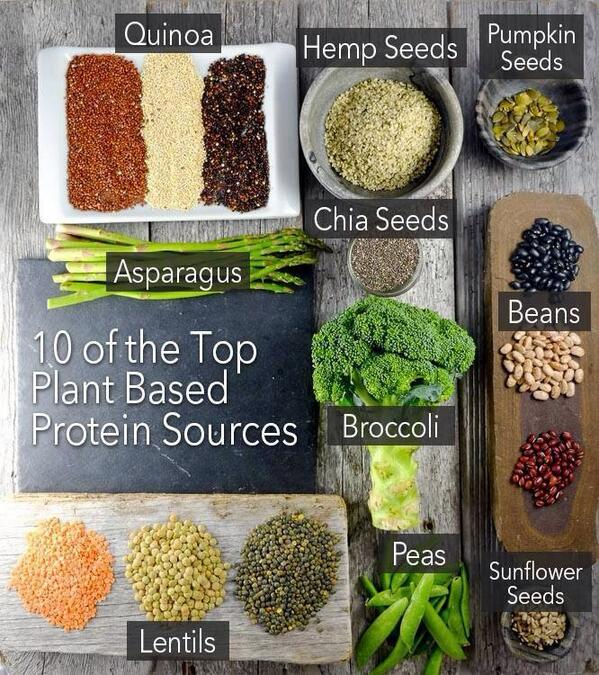 top plant based protein sources