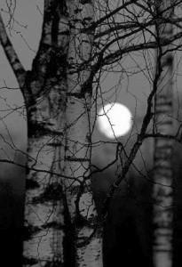 MoonTreeShadow
