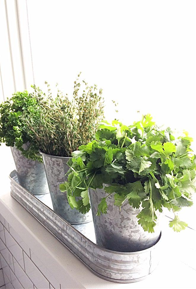 How To Start An Indoor Herb Garden From Seeds