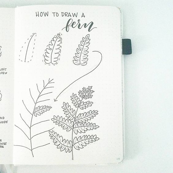 How to Draw a Fern Leaf
