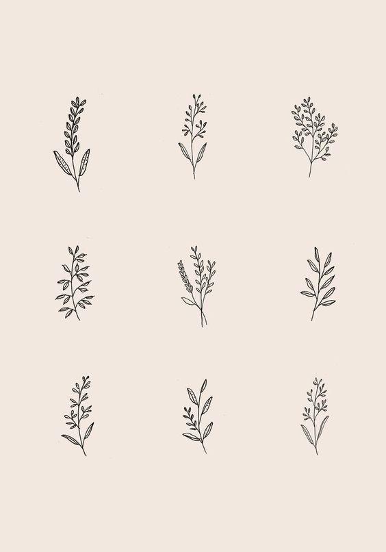 Botanical Leaf Drawings