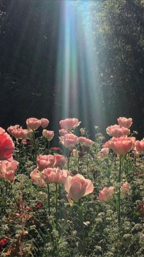Aesthetic Flowers Phone Wallpaper