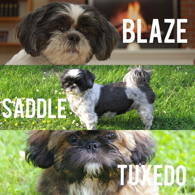 Shih Tzu Dog Coat Pattern