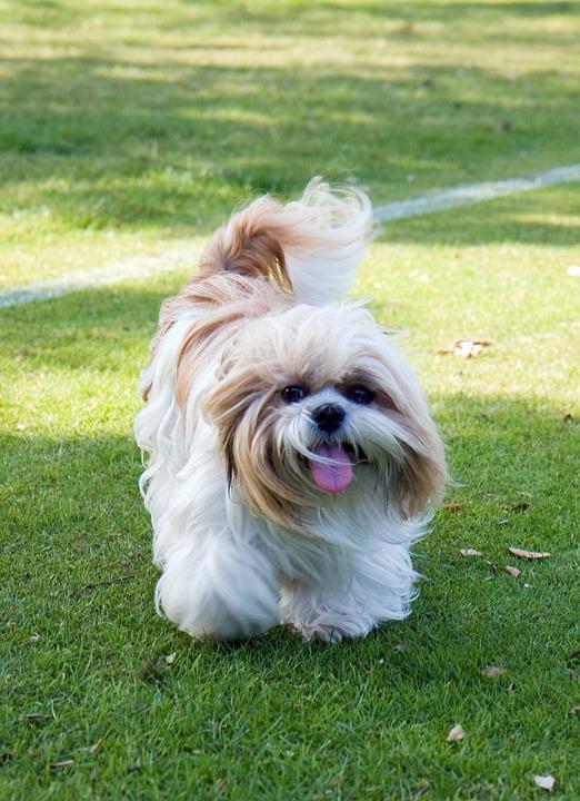 dog-220393_960_720