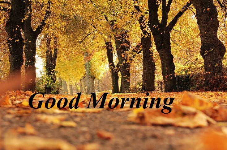Awesome Good Morning Nature Picture