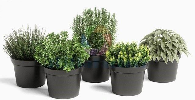 3dsky Pro – plants set 01 | Shikhapackers